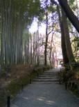 竹の寺 地蔵院(京都)